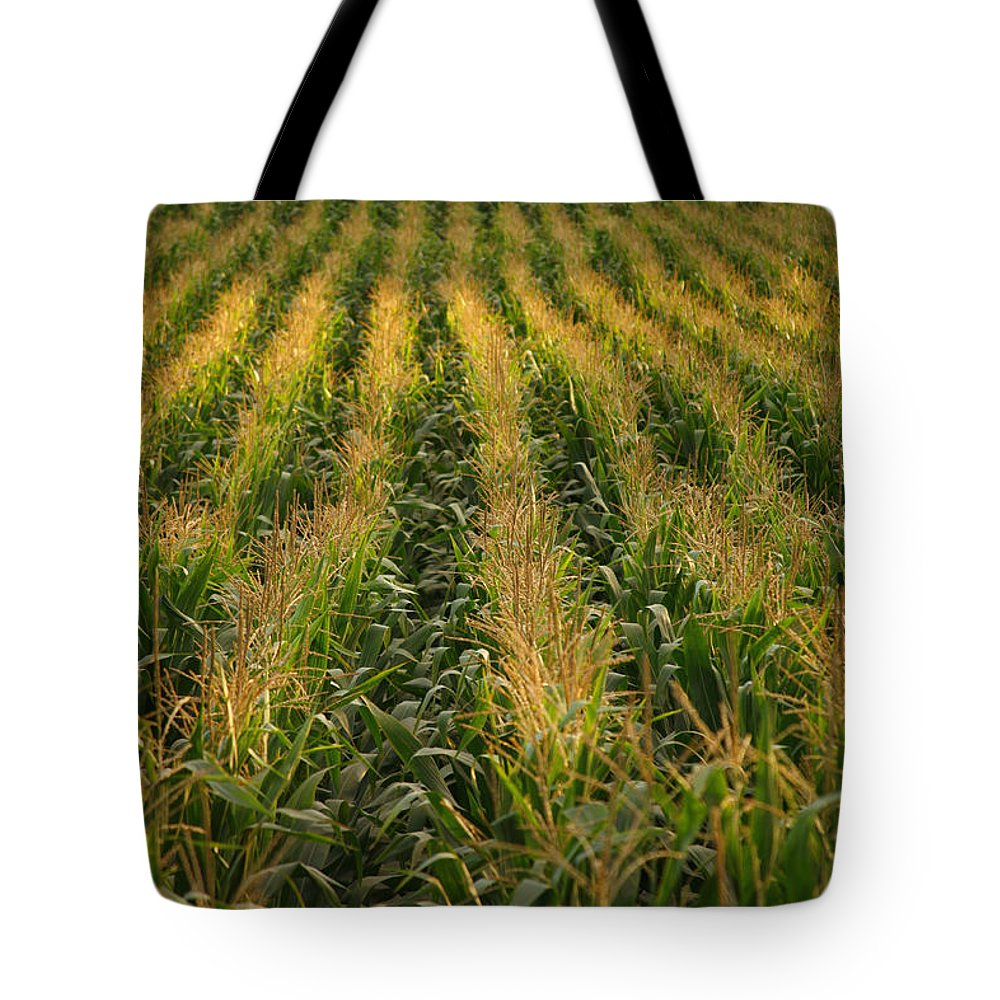 Acores Tote Bag featuring the photograph Corn Field by Gaspar Avila