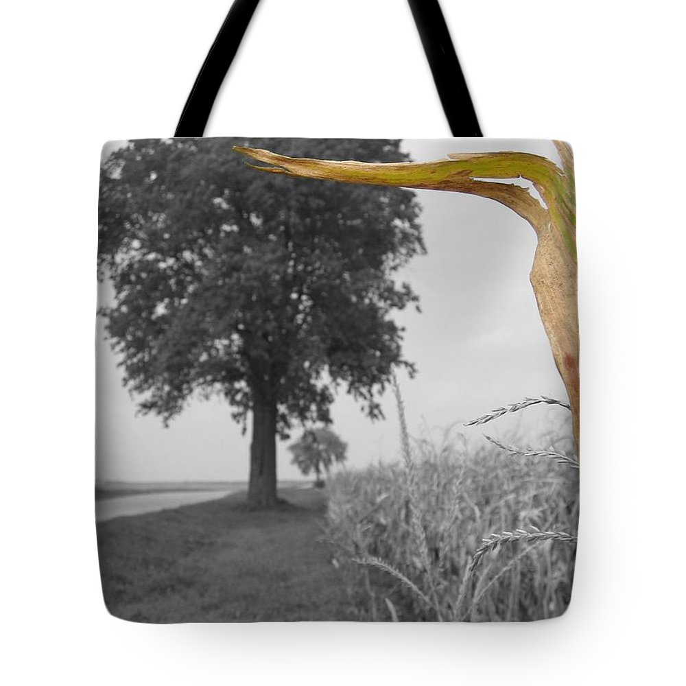 Landscape Tote Bag featuring the photograph Corn Tree by Dylan Punke