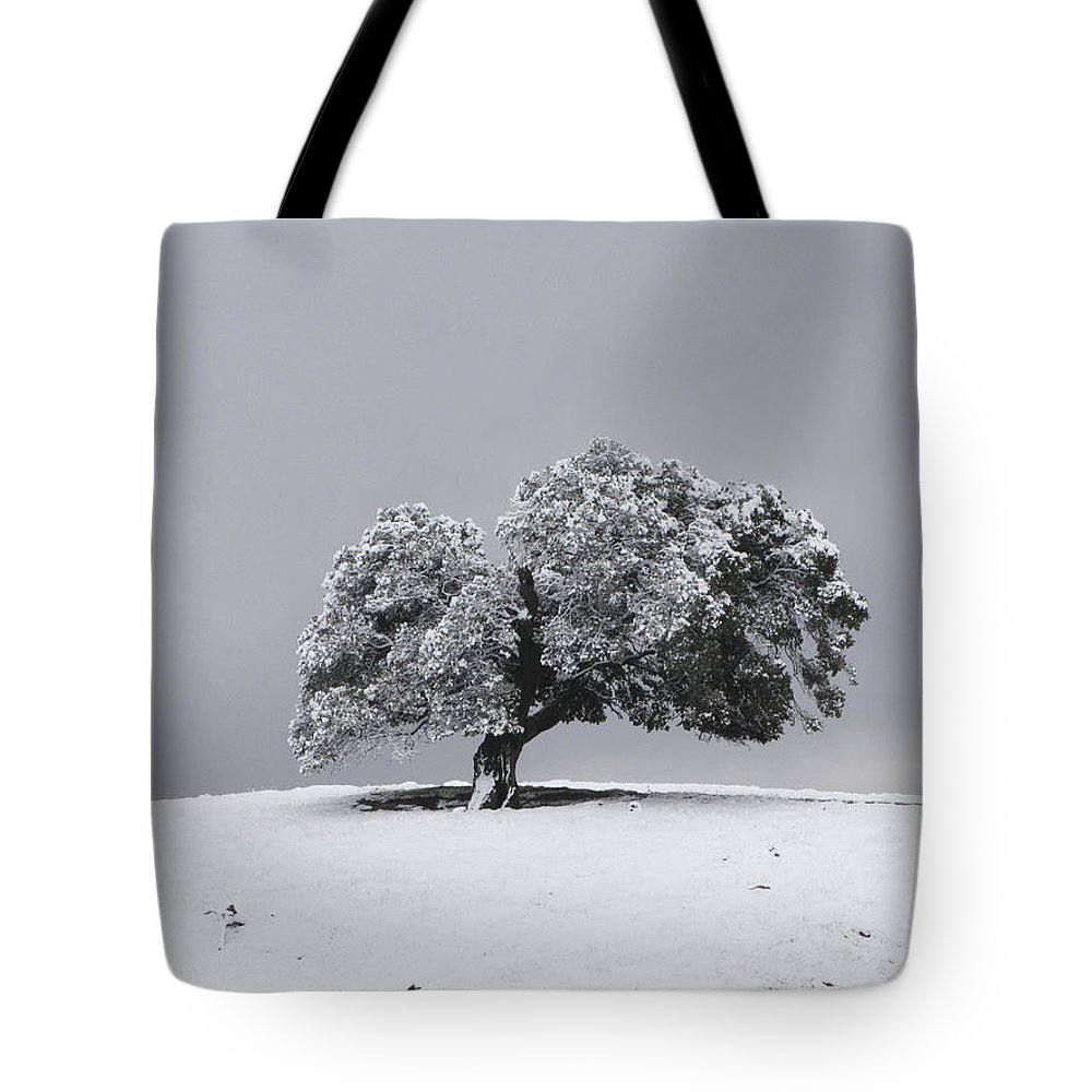 Tree Tote Bag featuring the photograph Corral Hollow Tree In Snow by Karen W Meyer