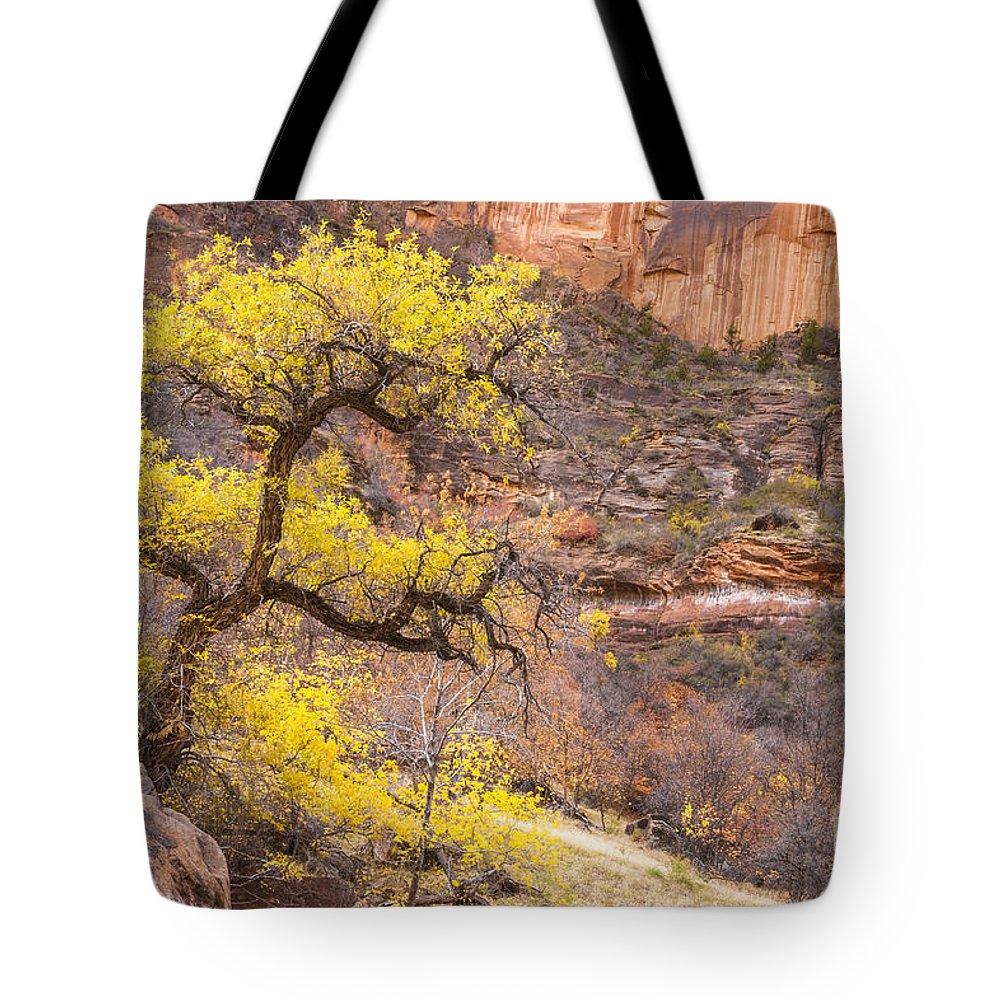 Zion Tote Bag featuring the photograph Cottonwood Tree With Vibrant Autumn Colour, Zion National Park, Utah Usa by Philip Preston