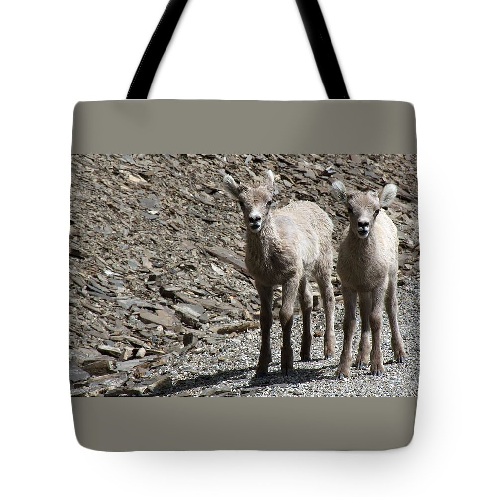 Baby Tote Bag featuring the photograph Couple Of Cuties- Baby Bighorn by Tiffany Vest