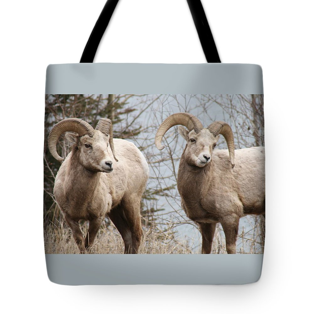 Bighorn Sheep Tote Bag featuring the photograph Couple Of Rams- Banff National Park by Tiffany Vest