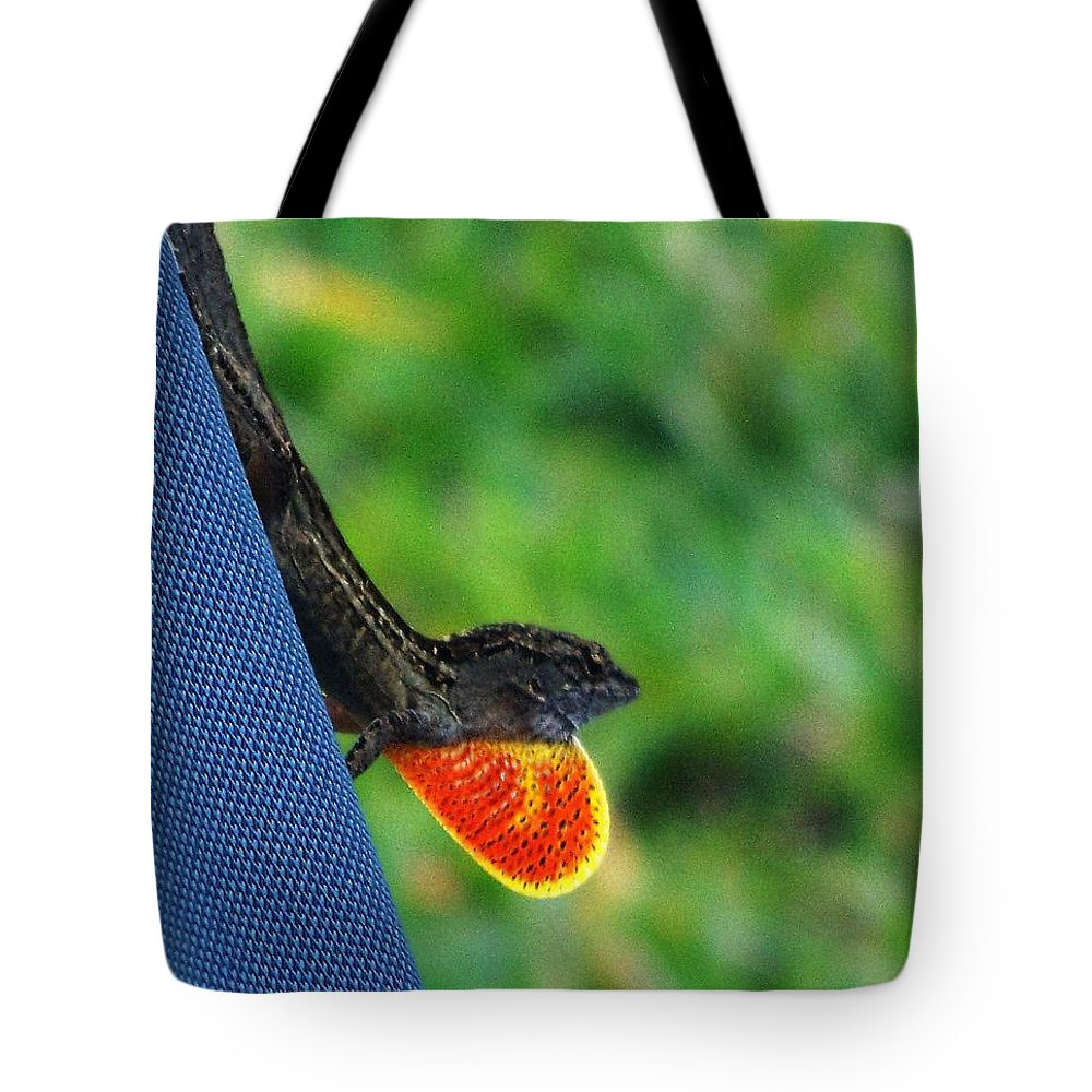 Brown Cuban Anole Tote Bag featuring the photograph Courtship by Pattie Frost