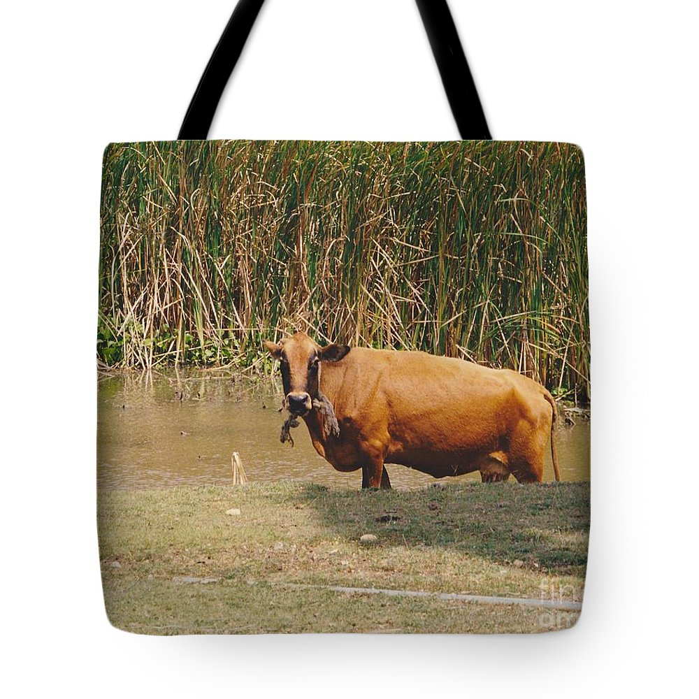 Animal Tote Bag featuring the photograph Cow In The Field by Michelle Powell