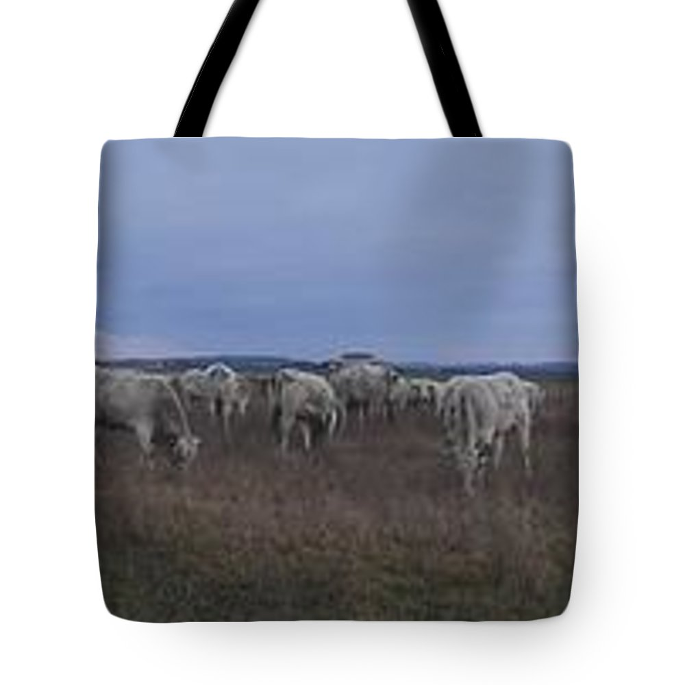 Cows Country Grass Landscape Wild Tote Bag featuring the photograph Cows And Cows by Luca Pisanu
