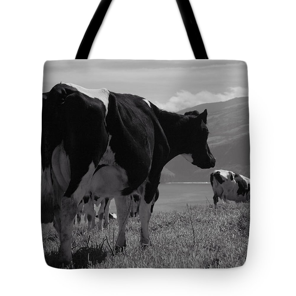 Azoren Tote Bag featuring the photograph Cows by Gaspar Avila