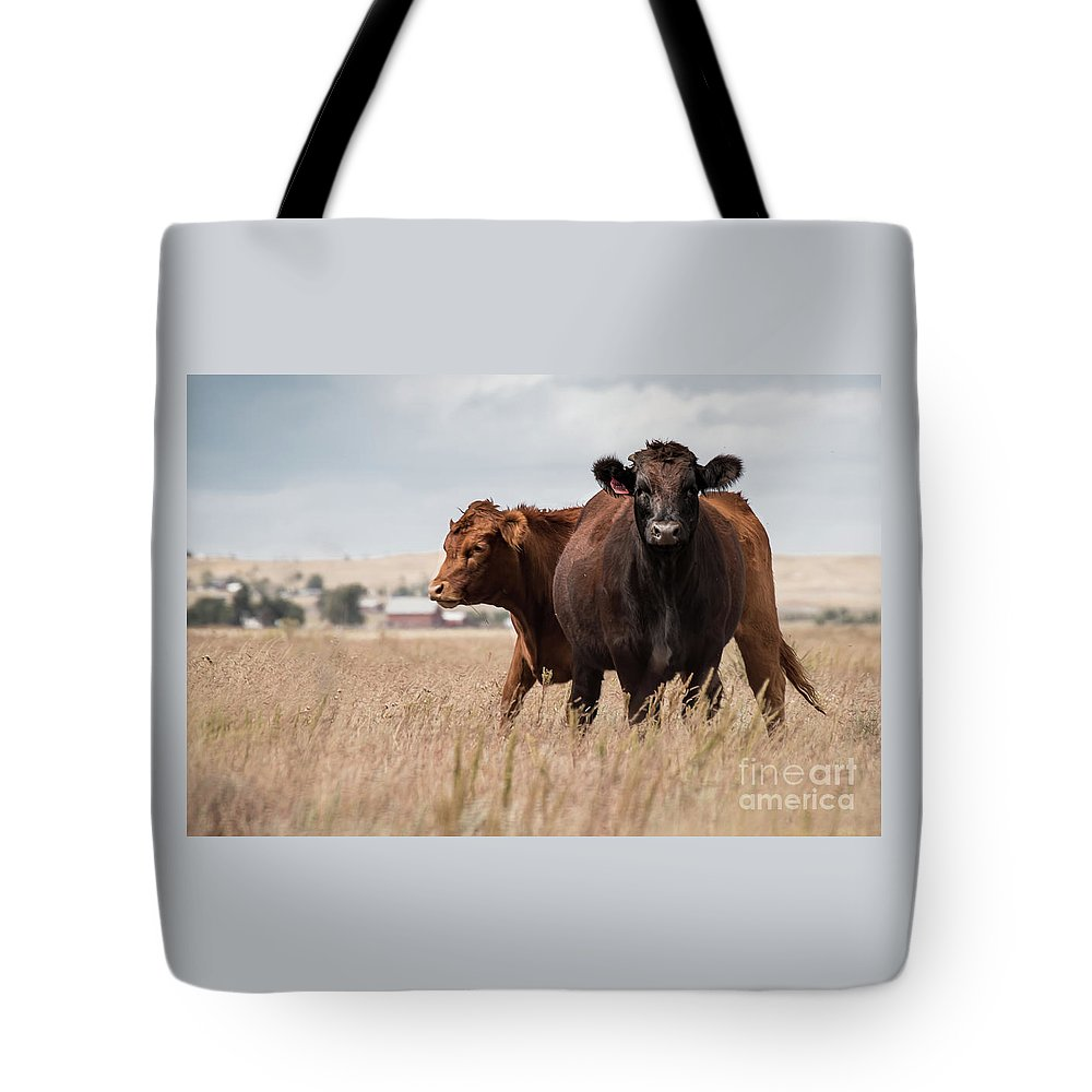 2 Cows Tote Bag featuring the photograph Cows In The Fall Pasture by Jennifer Mitchell
