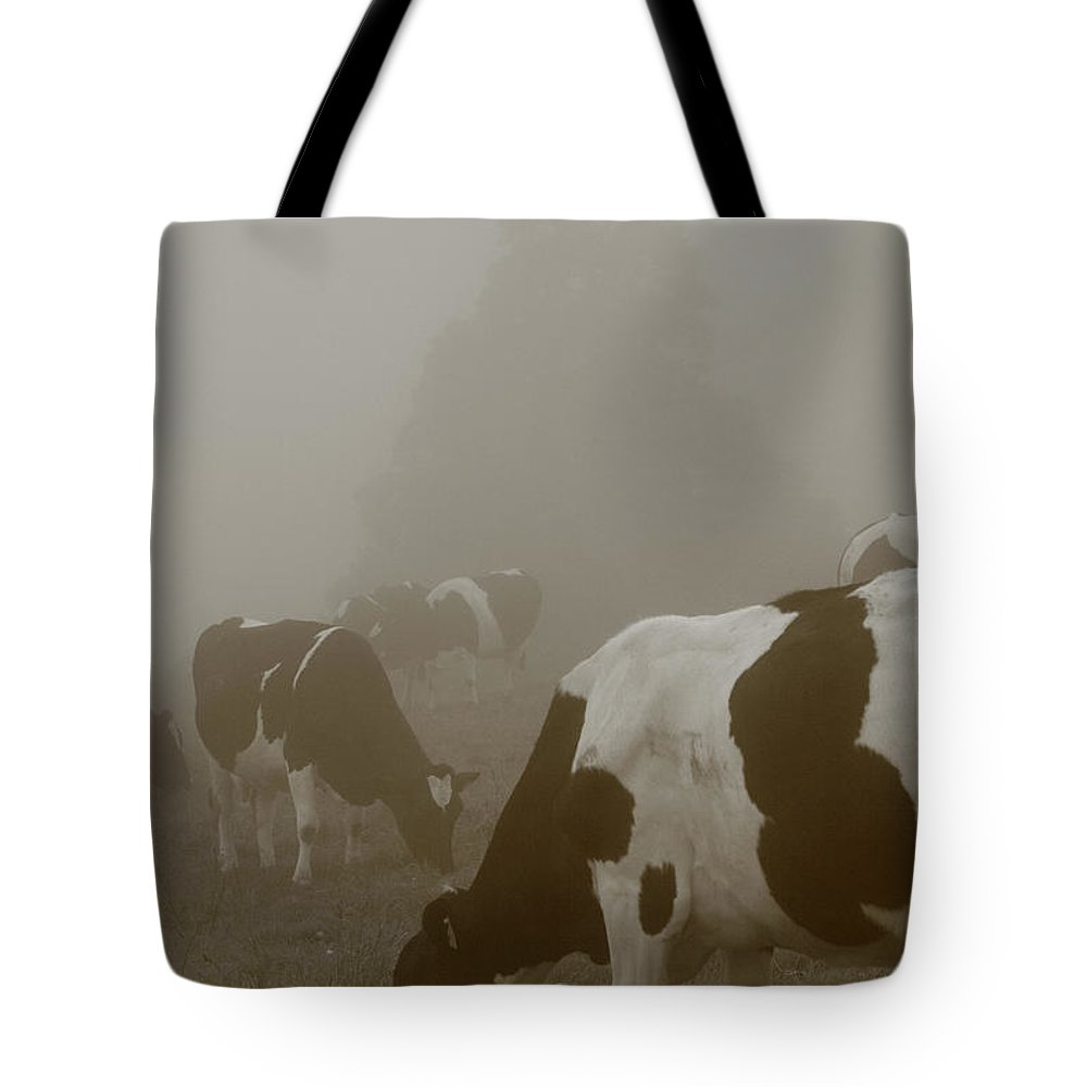 Animals Tote Bag featuring the photograph Cows In The Mist by Gaspar Avila