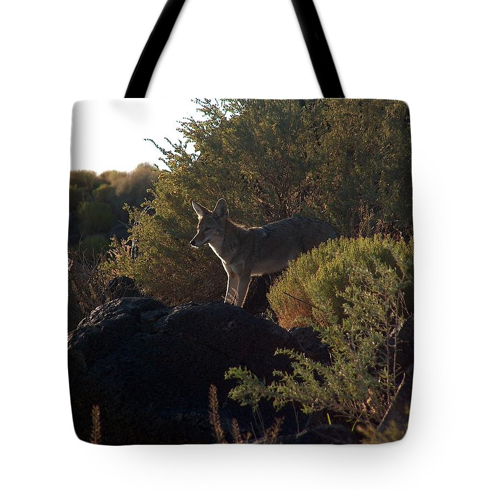 Coyote Tote Bag featuring the photograph Coyote At The Petrogyphs 2 by Tim McCarthy