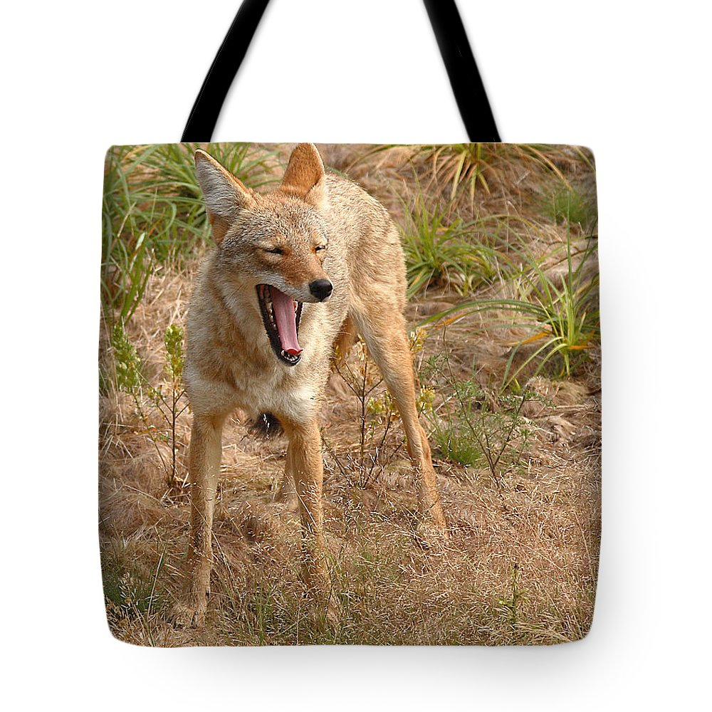 Coyote Tote Bag featuring the photograph Coyote Caught In A Yawn by Max Allen