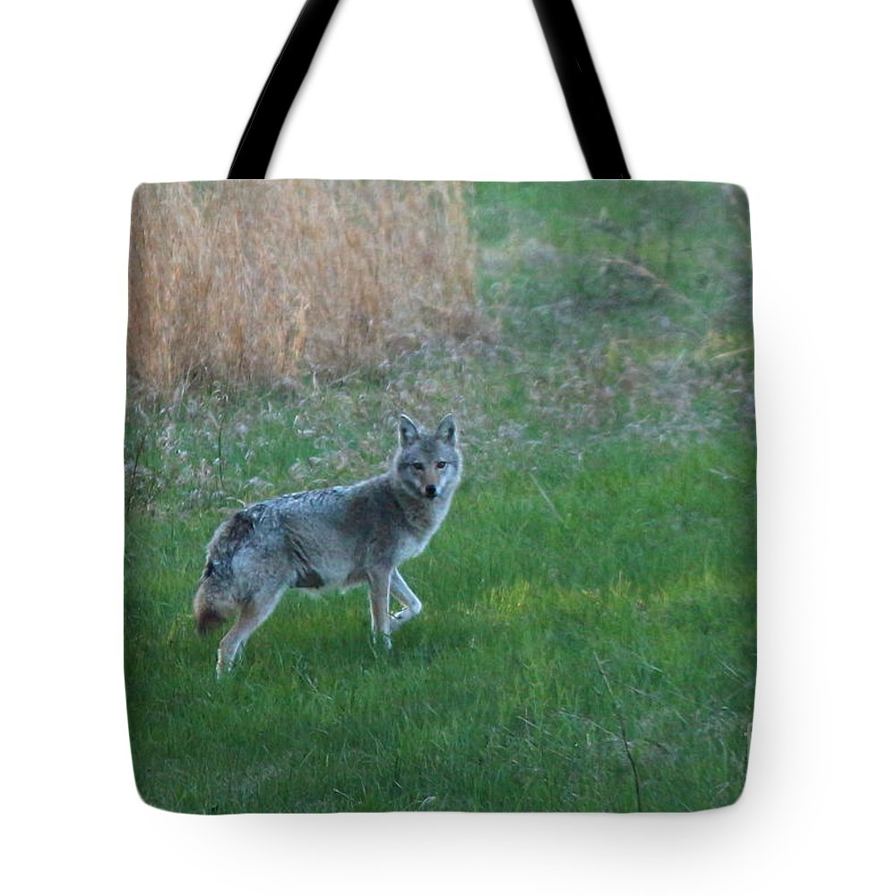 Coyote Tote Bag featuring the photograph Coyote Stance by Neal Eslinger