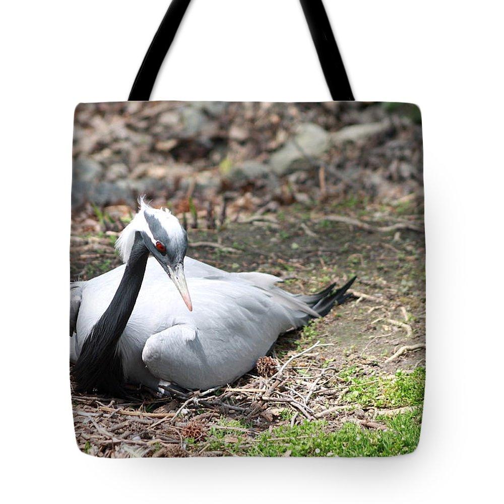 Sylvan Heights Bird Sanctuary 4 2015 Tote Bag featuring the photograph Crane by Teresa Doran