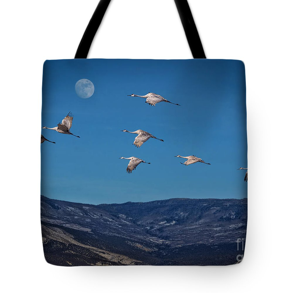 Sky Tote Bag featuring the photograph Cranes Across Colorado Blue by Janice Pariza