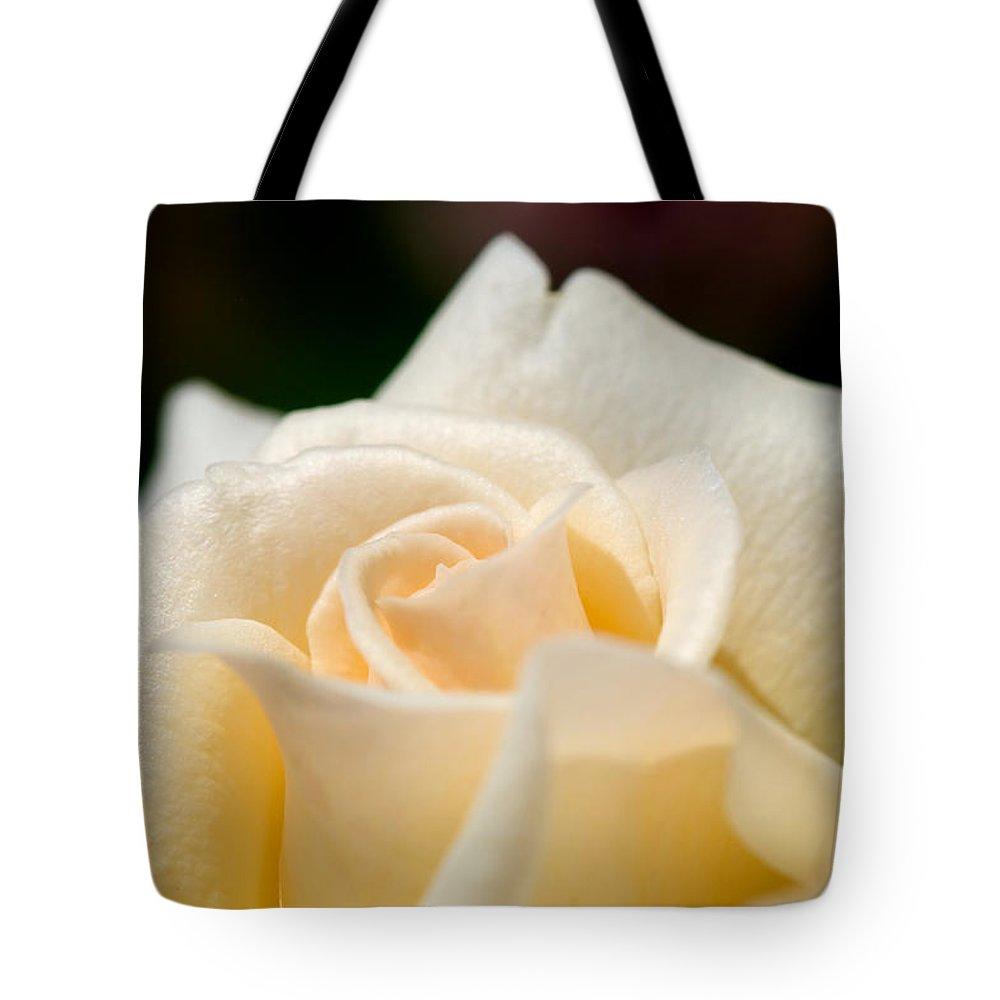 Lisa Knechtel Tote Bag featuring the photograph Cream Rose Kisses by Lisa Knechtel