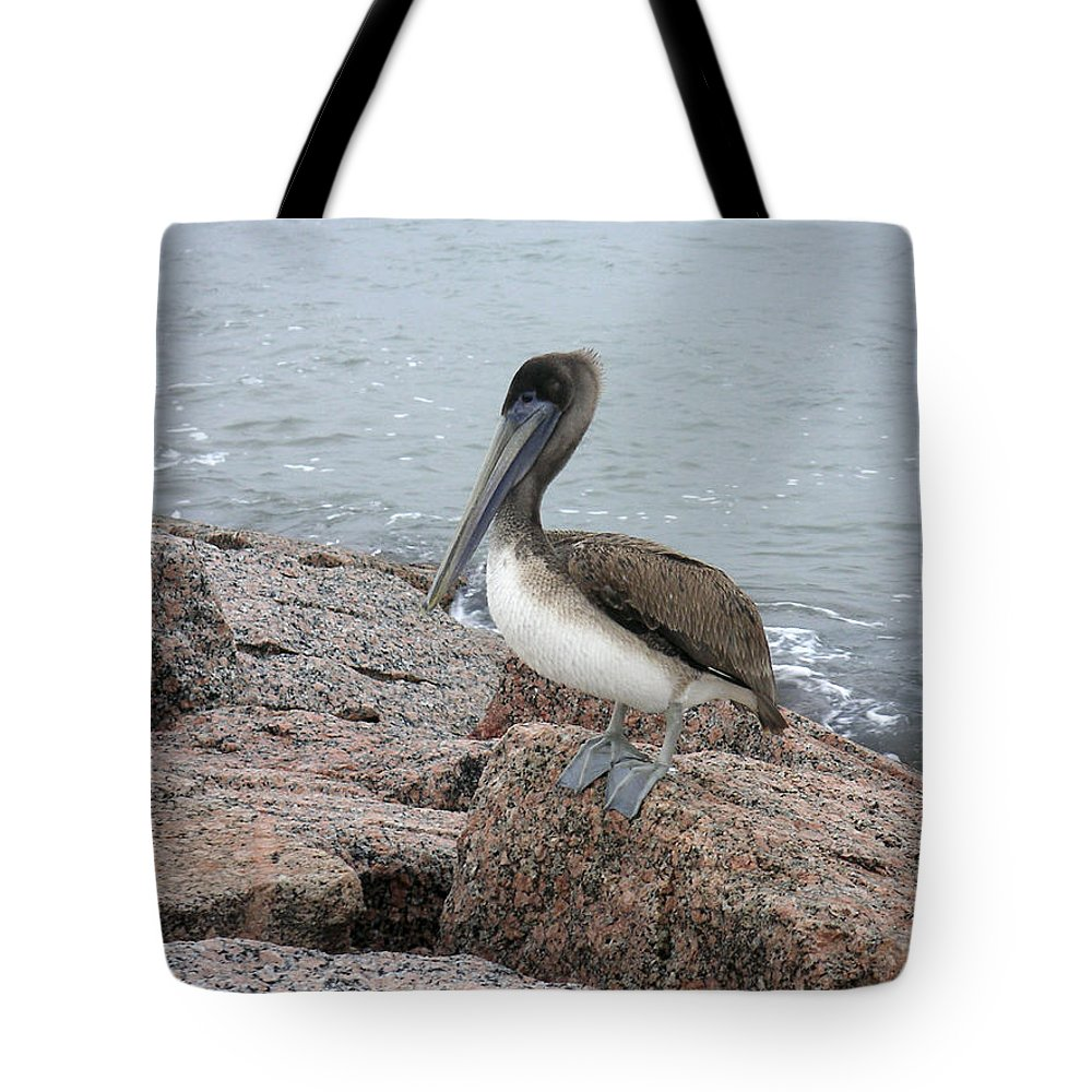 Nature Tote Bag featuring the photograph Creatures Of The Gulf - His Best Side by Lucyna A M Green