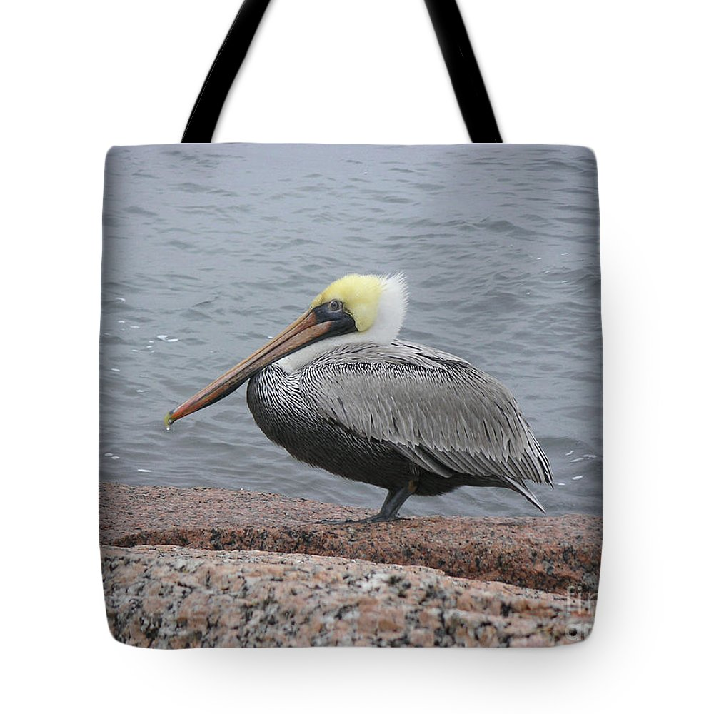 Nature Tote Bag featuring the photograph Creatures Of The Gulf - The Squatter by Lucyna A M Green