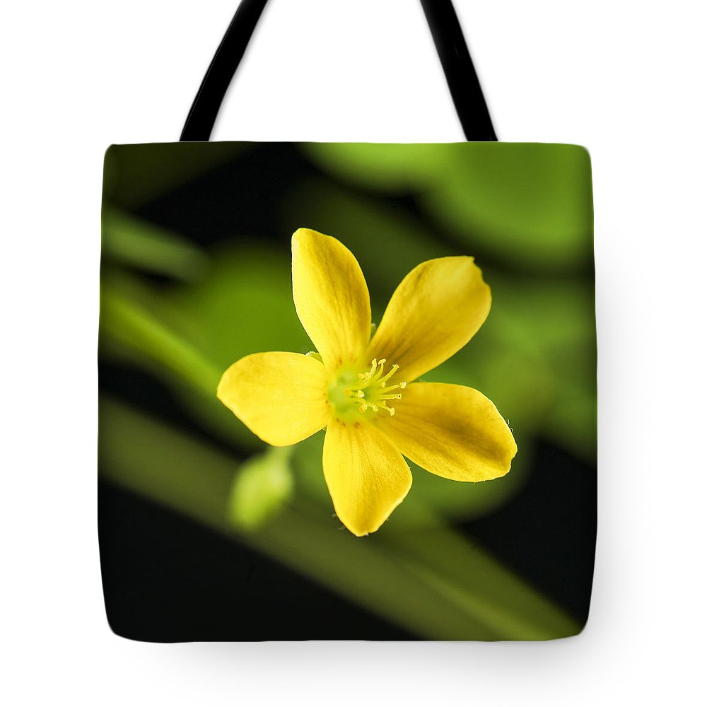 Nobody Tote Bag featuring the photograph Creeping Woodsorrel Square by Donald Erickson