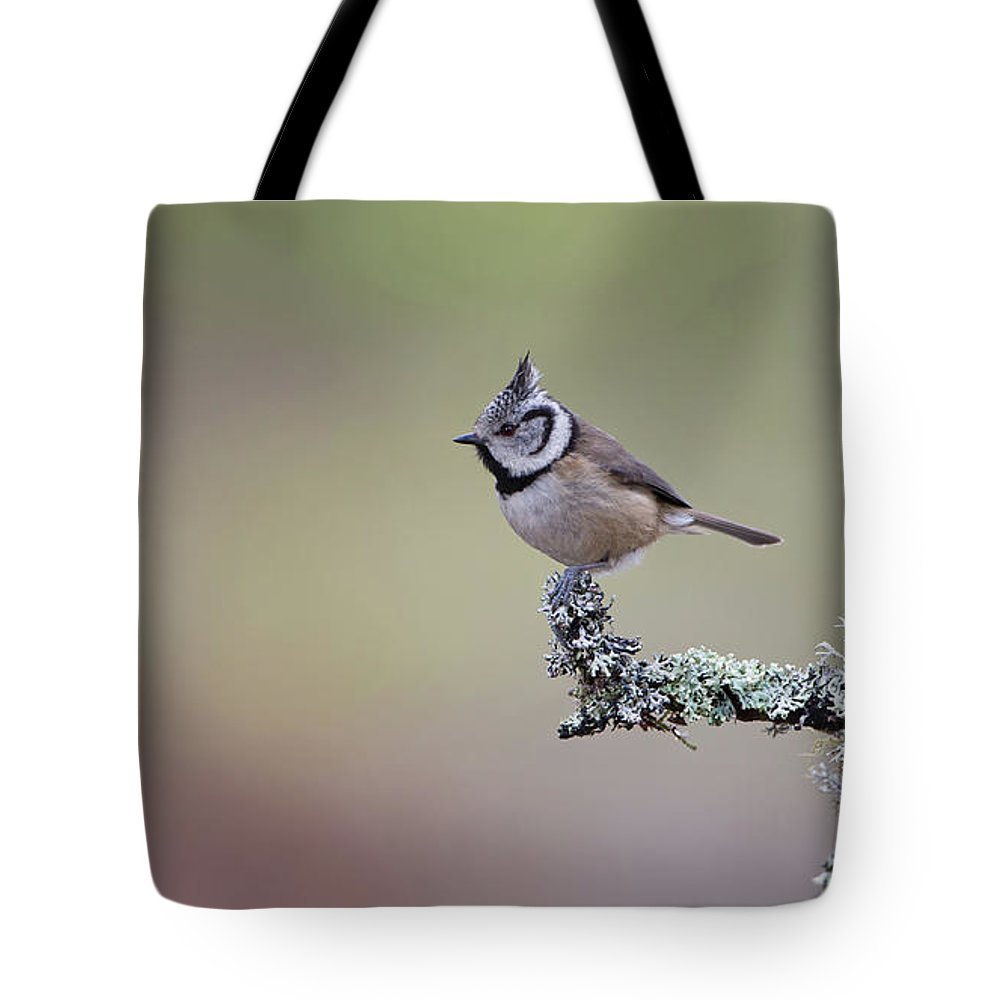 Crested Tote Bag featuring the photograph Crested Tit Lichen by Peter Walkden