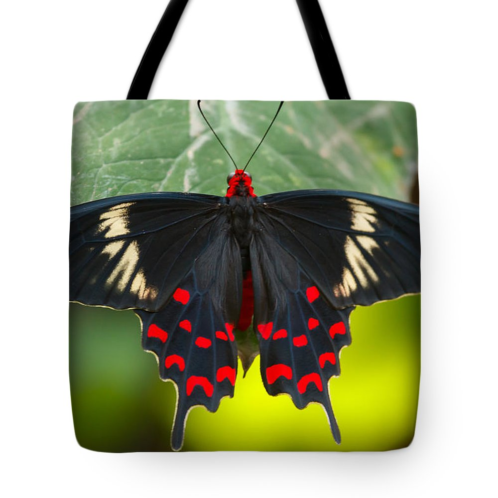 Butterfly Tote Bag featuring the photograph Crimson Rose Butterfly by Abhijeet Sawant