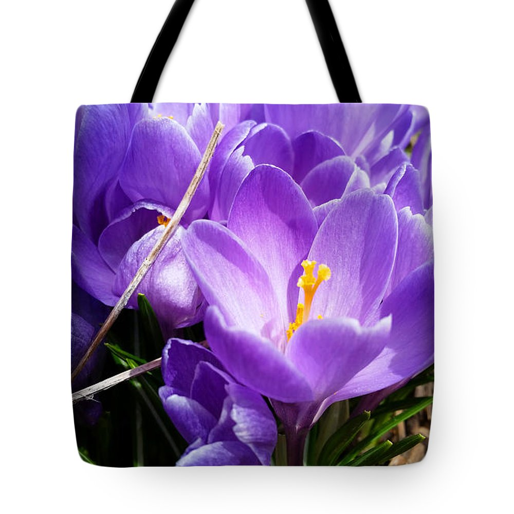 Crocus Tote Bag featuring the photograph Crocus 1 by Brook Burling