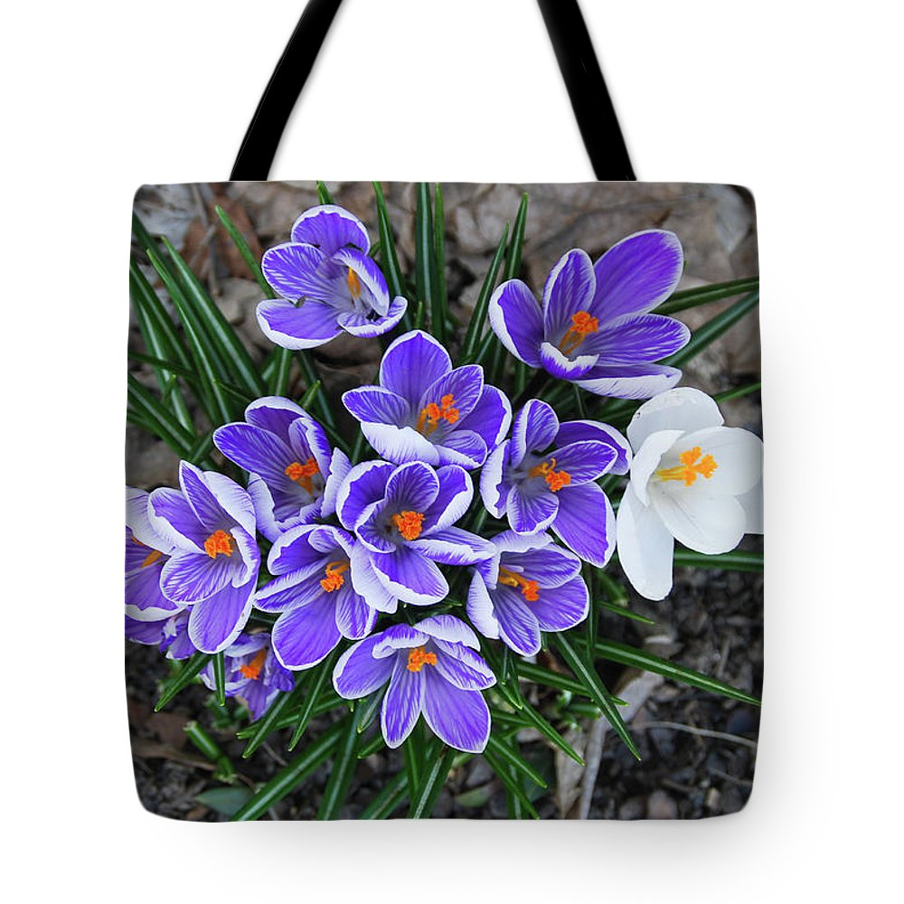 Pams Gardens Tote Bag featuring the photograph Crocus 6675 by Guy Whiteley