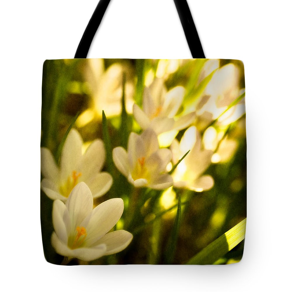 Beauty In Nature Tote Bag featuring the photograph Crocus Cluster by Venetta Archer