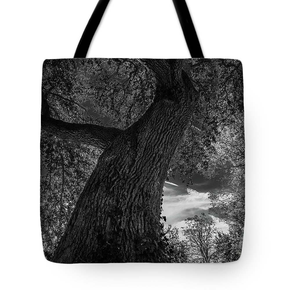 Black And White Tote Bag featuring the photograph Crooked Oak Black And White by Jeffrey Miller