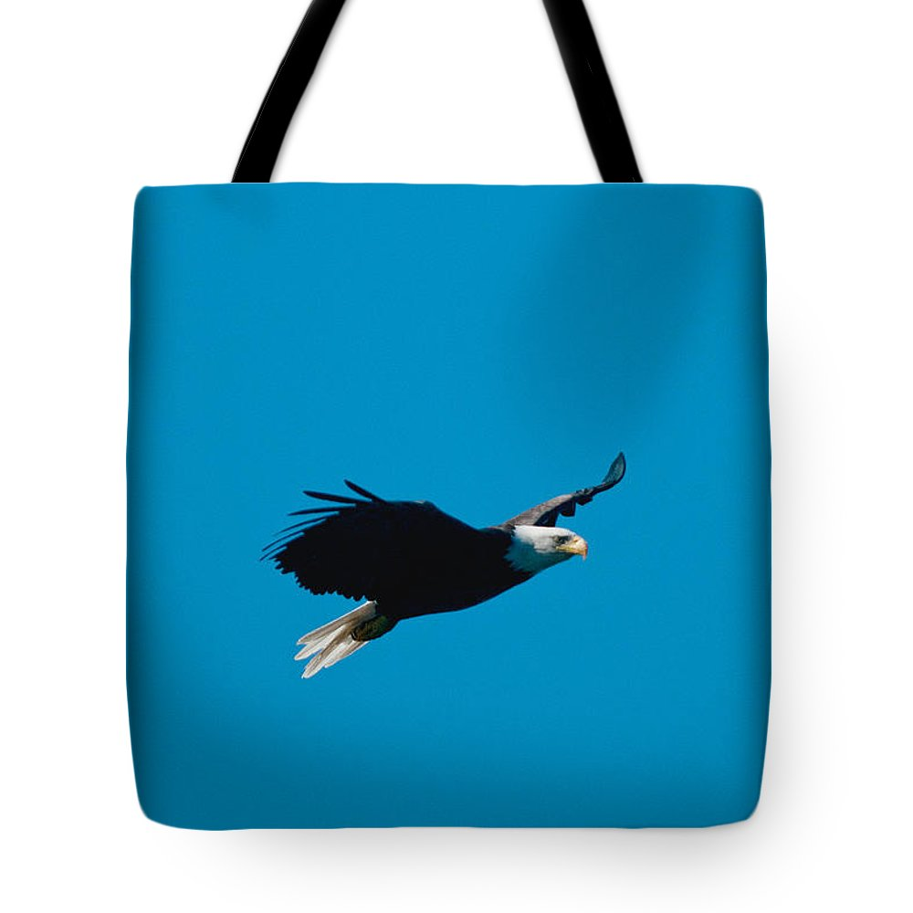 Eagle Tote Bag featuring the photograph Cruising by Paul Mangold