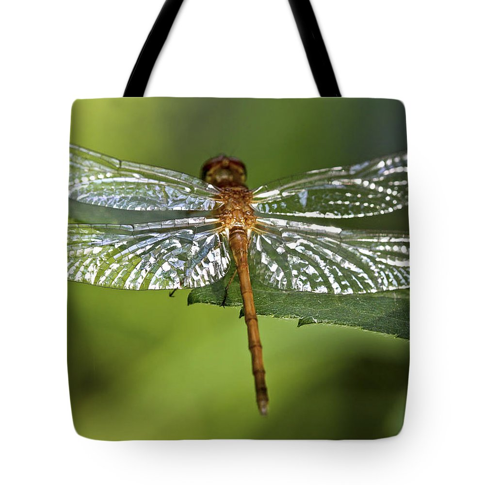 Bug Tote Bag featuring the photograph Crystal Wings by Evelina Kremsdorf