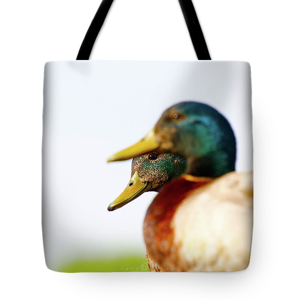 Tote Bag featuring the photograph Curiosity by Tony Umana