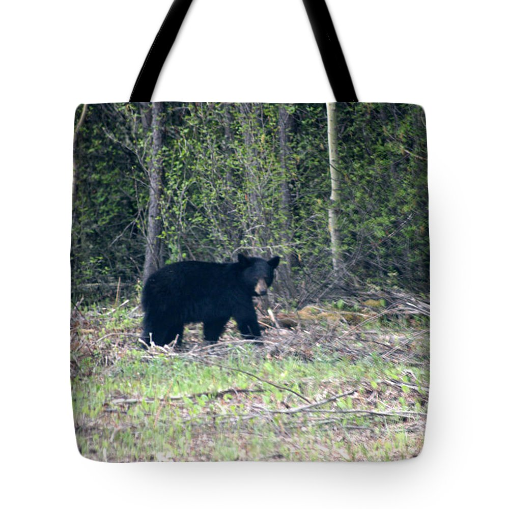 Black Bear Nature Wild Animal Trees Forest Rainbow Lodge Piprell Lake Saskatchewan Tote Bag featuring the photograph Curious Black Bear by Andrea Lawrence