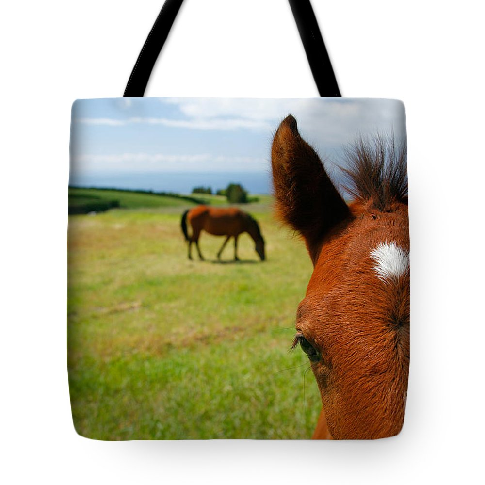 Farm Tote Bag featuring the photograph Curious Colt by Gaspar Avila