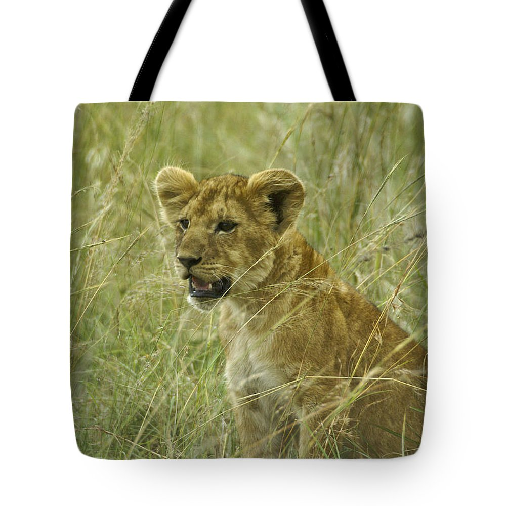 Africa Tote Bag featuring the photograph Curious Cub by Michele Burgess