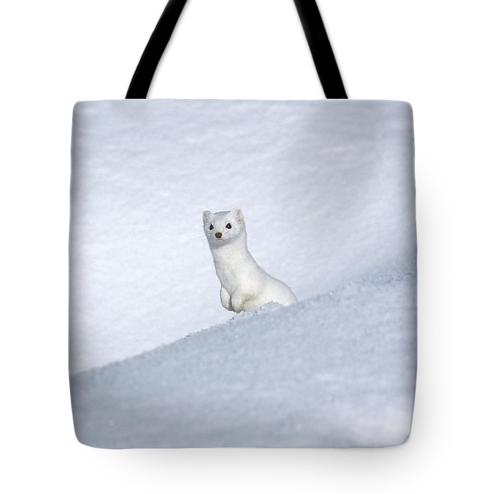 Yellowstone Tote Bag featuring the photograph Curious Ermin by Sandra Bronstein