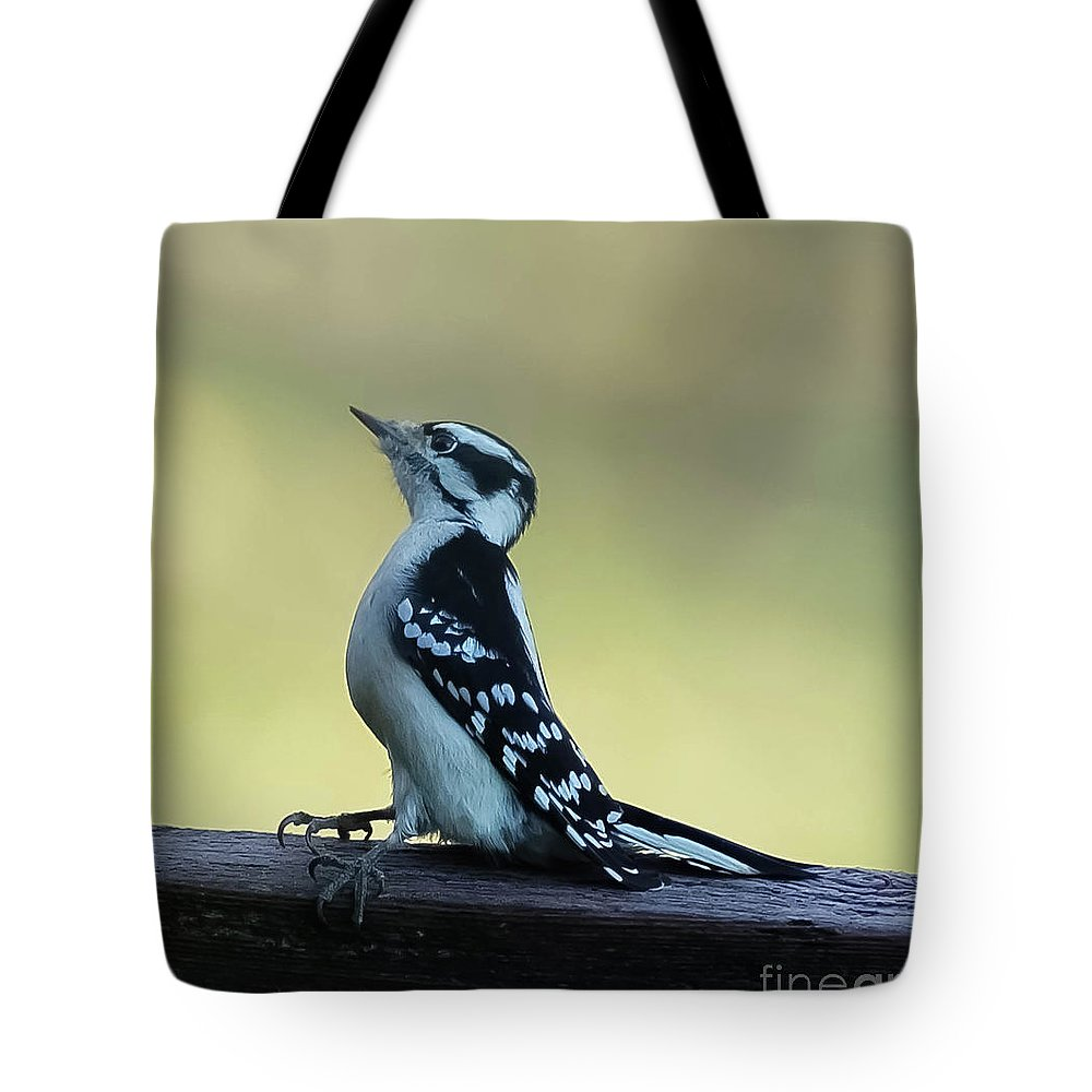 Outdoors Tote Bag featuring the photograph Curious Hairy Woodpecker by Maria Costello