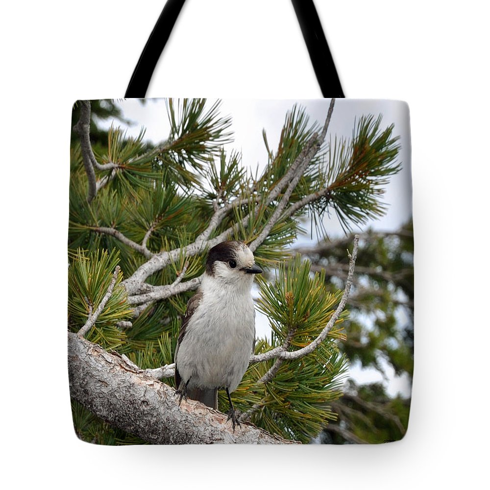 Bird Tote Bag featuring the photograph Curious by Terry Anderson