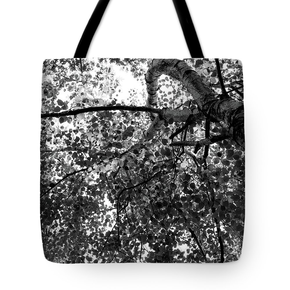 Birch Tote Bag featuring the photograph Curving Birch Bw by Mary Bedy