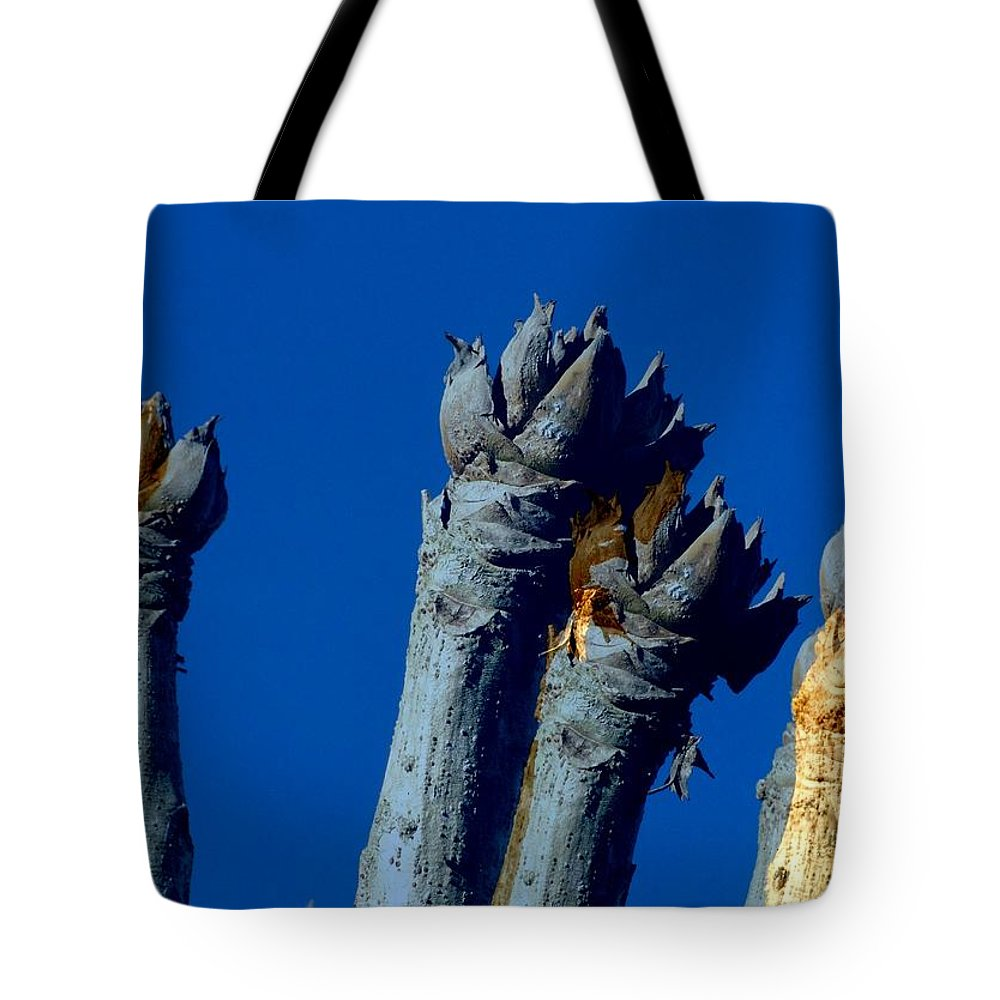 Cussonia Tote Bag featuring the photograph Cussonia In Blue by Derick Burke
