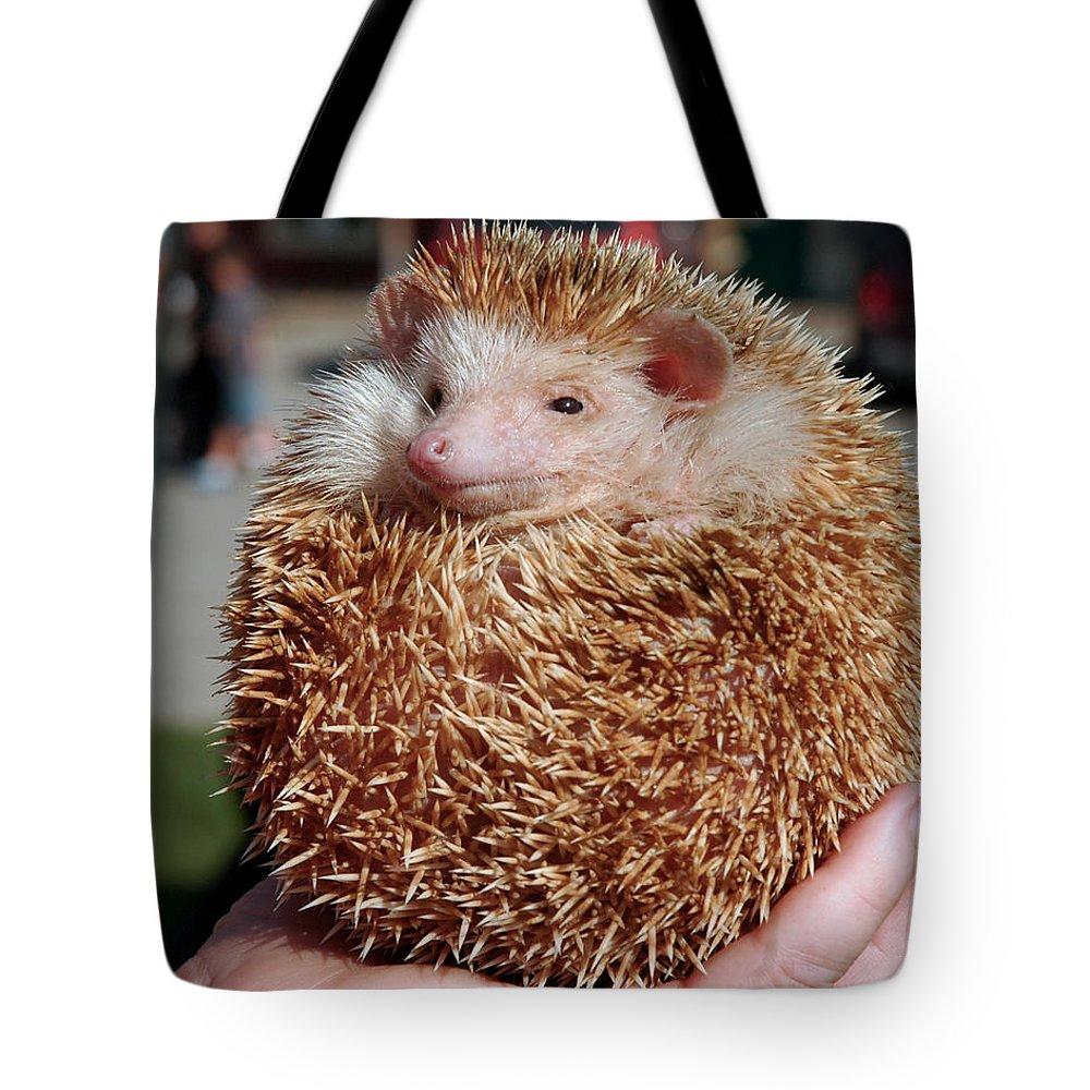 Usa Tote Bag featuring the photograph Cute Little Hedge Ball by LeeAnn McLaneGoetz McLaneGoetzStudioLLCcom