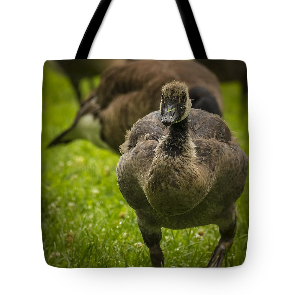 Goose Tote Bag featuring the photograph Cute On The Move by Jorge Perez - BlueBeardImagery