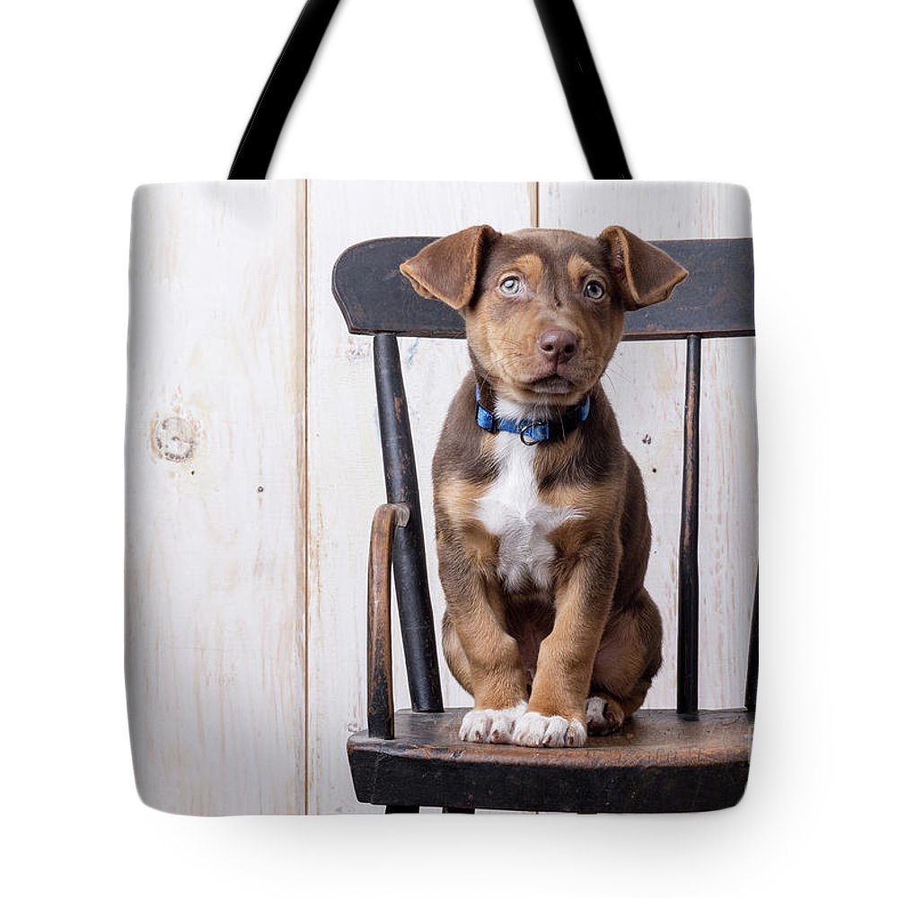 Animal Tote Bag featuring the photograph Cute Puppy Dog On A High Chair by Edward Fielding