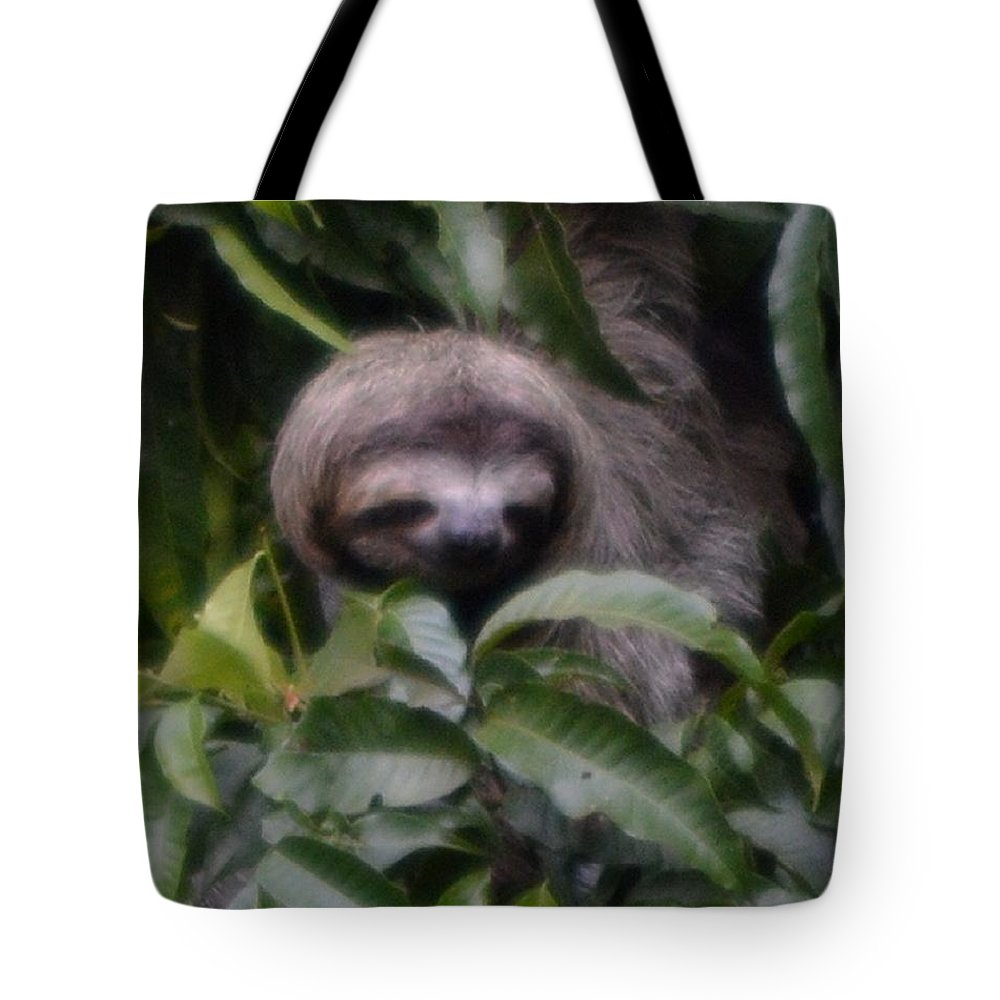 Three-toed Sloth Tote Bag featuring the photograph Cute Sloth Face by Sally Jones
