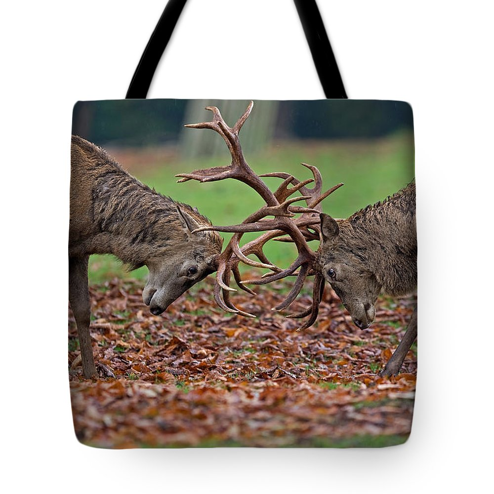 Deer Tote Bag featuring the photograph D U E L L by Thomas Herzog