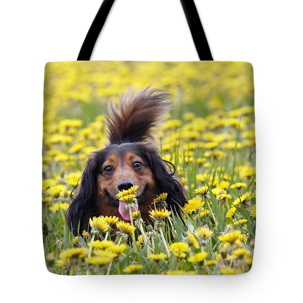 Dachshund Tote Bag featuring the photograph Dachshund On A Meadow In Bloom by Michal Boubin