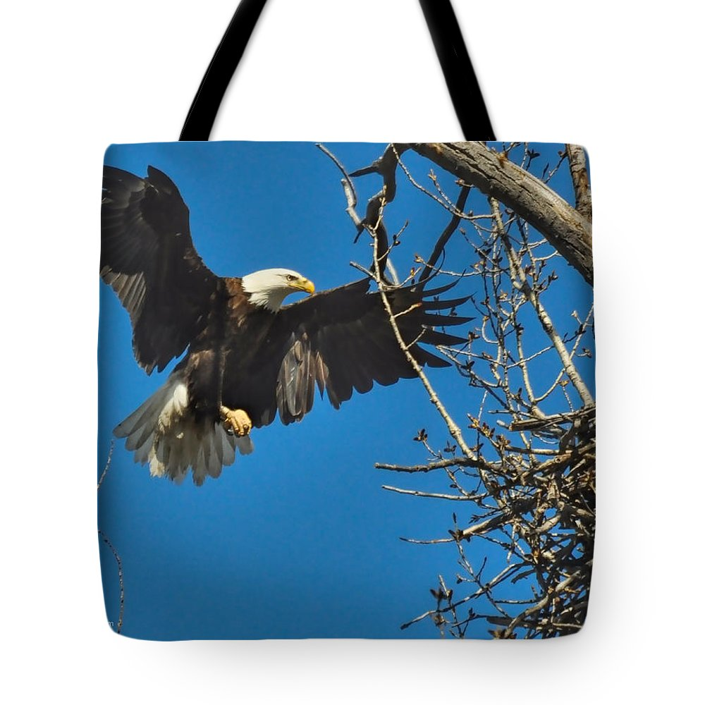 American Bald Eagle Tote Bag featuring the photograph Daddy's Home by Rick Fisk