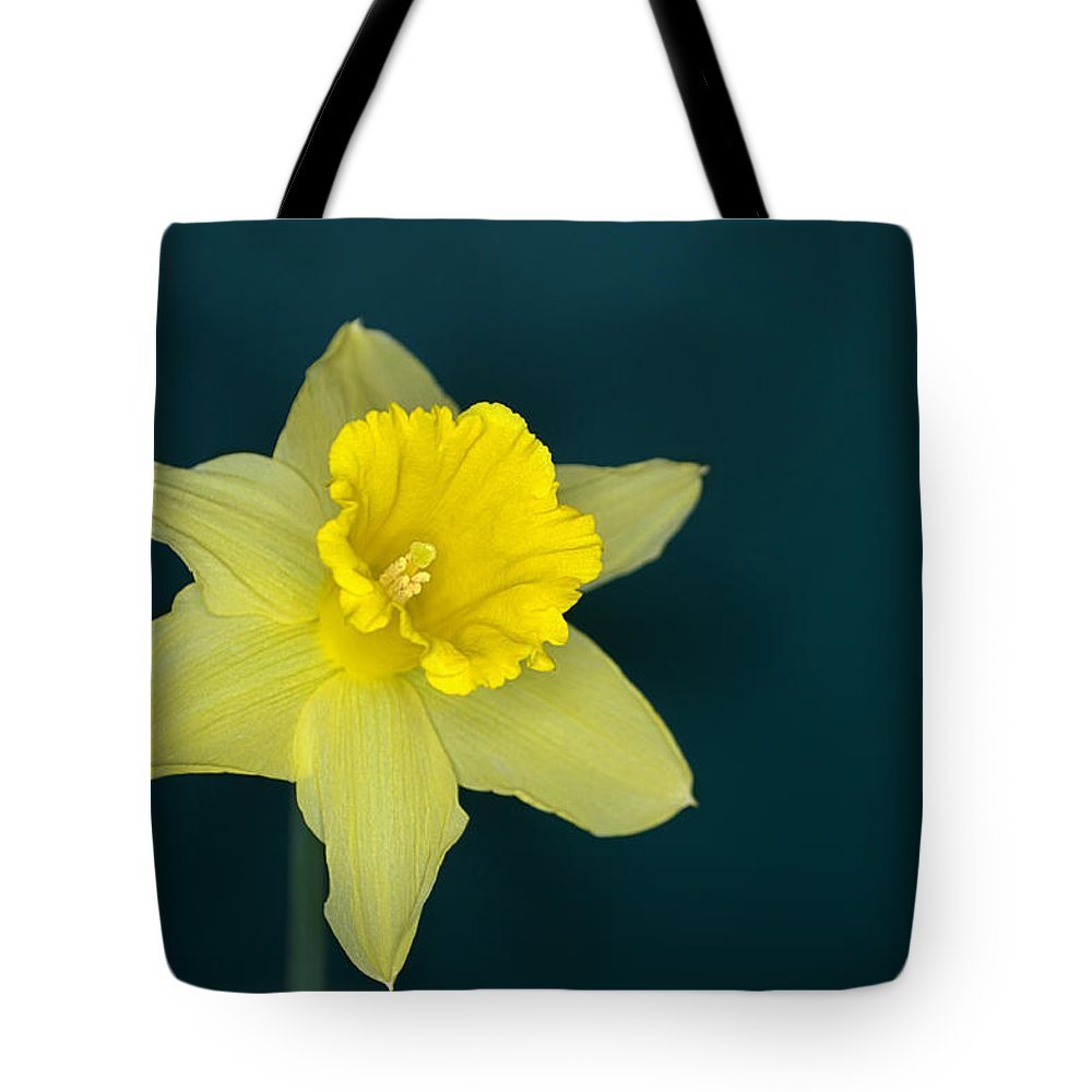 Daffodil Tote Bag featuring the photograph Daffo The Dilly by Chris Day