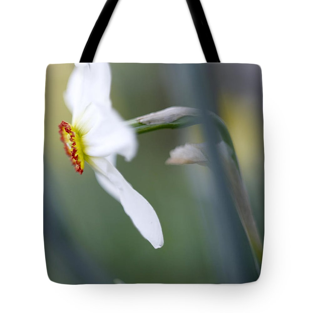 White Tote Bag featuring the photograph Daffodil 3 by Tony Cordoza