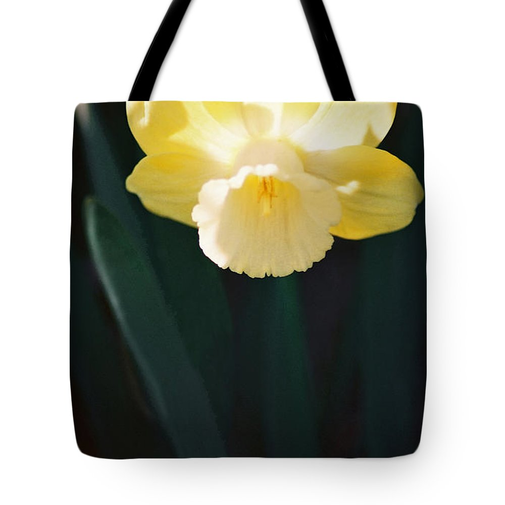 Daffodil Tote Bag featuring the photograph Daffodil by Steve Karol