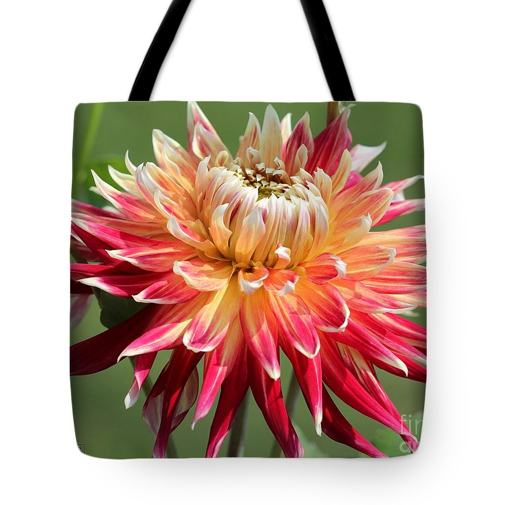 Mccombie Tote Bag featuring the photograph Dahlia Named Akita by J McCombie