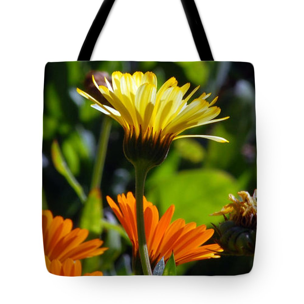 Dasy Tote Bag featuring the photograph Daisies by Amy Fose